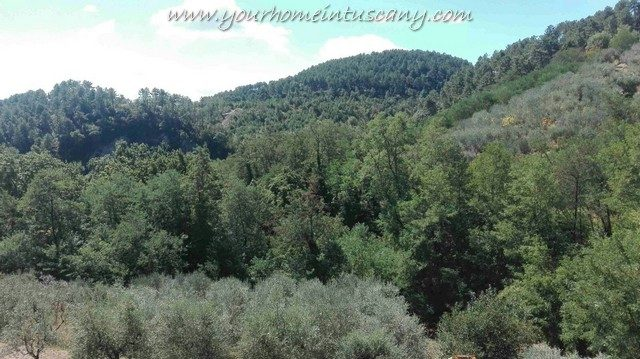 views over woodland and olive grove