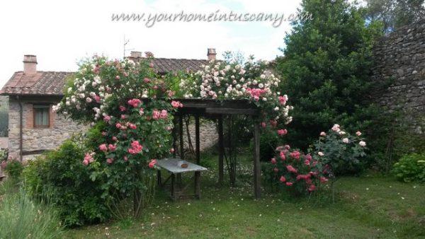 la pergola di rose nel giaridno