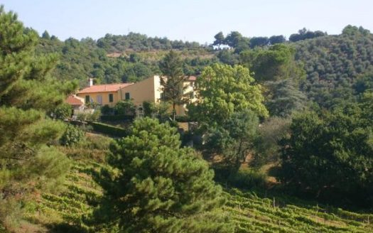 farmhouse for sale vecchiano-tuscany